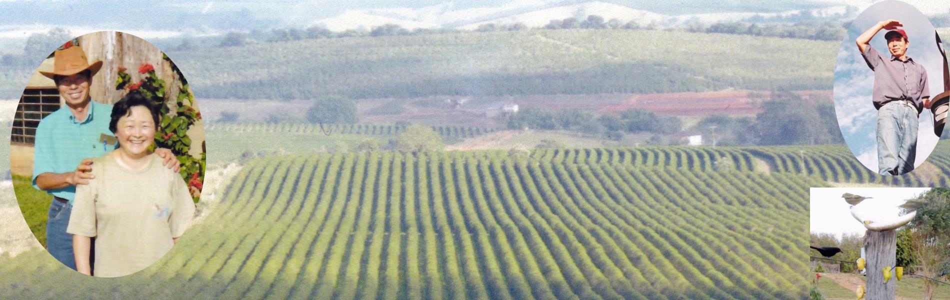 パライーゾ農園 毎日一万回「ありがとう」SUZUKI有機JAS「極みコーヒー」